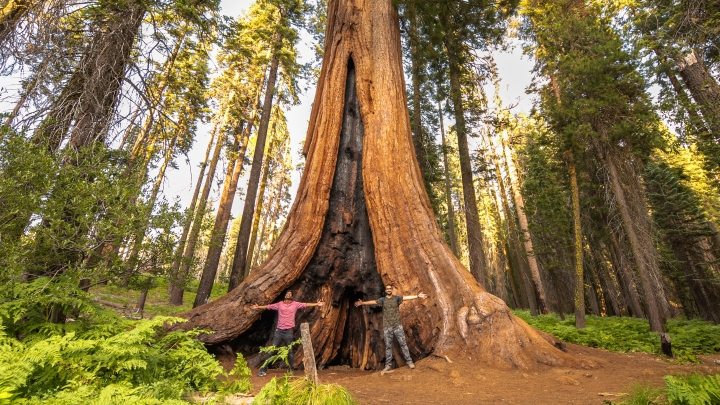 A road trip from San Francisco to the Sequoia National Park: A day tripguide